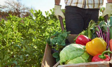 La Agroecología: porqué es tendencia y de qué se trata.